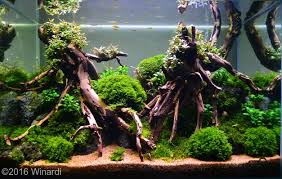 Aga Aquascape 2016 Aga Aquascaping Contest Entry 486 Aquascape Pinterest