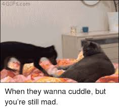 Still Mad Meme - a gifs com when they wanna cuddle but you re still mad gif meme on