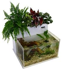 Betta In Vase 7 Awesome Betta Fish Aquaponics Kits For Your Home Tfcg