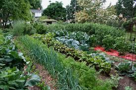 kitchen garden in cinque terre italy tended p garden trends