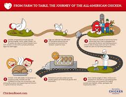 from farm to table from farm to table the journey of the all american chicken