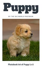 Dog Cat Meme - puppy by the big world photobook photo book dog dog photography