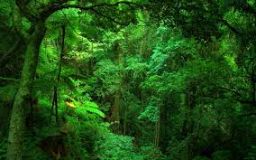 Plants In The Tropical Rain Forest - why are rainforests important wonderopolis