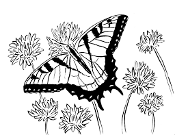 coloring pages archives samantha bell