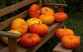 pumpkin iphone wallpaper misc pumpkin autumn harvest orange nature yellow images for hd 16