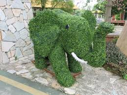 Elephant Topiary Photos Cute Topiary Plants In South China U0027s Dongguan Global Times