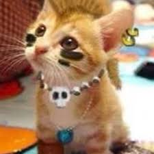 Kitten Halloween Costumes Pet 19 Rock Kitty Images Funny Cats Kitty Cats