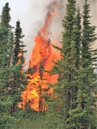 Wildfire Suppression Equipment by White Horse Forestry Inc Provider Of Wildland Firefighter