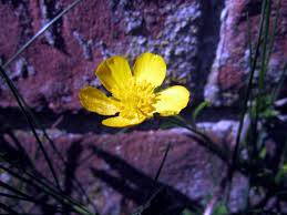 herb wall free picture garden flower leaf flora nature environment