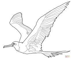 frigatebird coloring pages free coloring pages