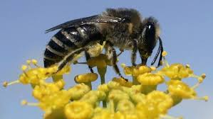 the world is finally trying to save the bees u2014 quartz