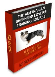 australian shepherd outline dogs u003e u003e australian shepherd free training course on australian