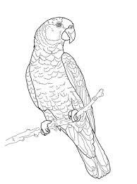 parrots coloring pages imperial amazon parrot coloring page free printable coloring pages