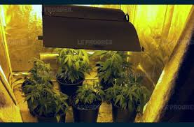 chambre de culture complete cannabis chambre de culture complete cannabis free le substrat si lors de