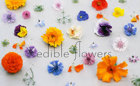 edible flowers edible flowers with lentil henry hudson