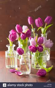 Images Of Tulip Flowers - beautiful purple tulip flowers bouquet in vases stock photo