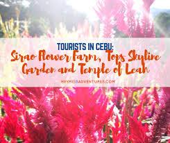 tourists in cebu sirao flower farm tops skyline garden and