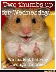 Wednesday Meme - happy wednesday latte lassie pinterest happy wednesday