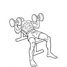 How To Do Dumbbell Bench Press Dumbbell Bench Press Gymwolf