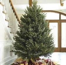 fraser fir christmas tree how to decorate a christmas tree