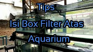 membuat kotak filter aquarium tips isi box filter atas aquarium youtube