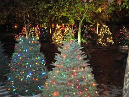 charlie brown christmas lights windsor town manager s blog charlie brown christmas tree grove on