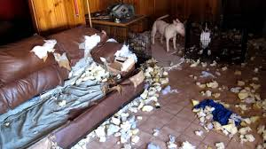 Leather Sofa And Dogs Destroys Leather Warning F Words