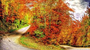 nature colorful leaves autumn pathway fall seasons landscape