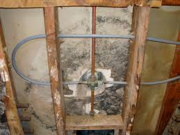 mold remediation san diego mold removal mold abatement toxic mold