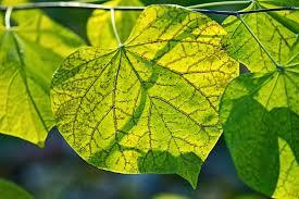photo potpourri some autumn leaf colors belie tree names
