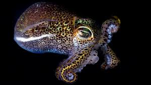 incredible sea creatures beautiful pictures hd 1280x720