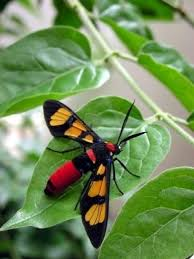 Rug Bugs 54 Best Bugs Images On Pinterest Nature Beautiful Bugs And