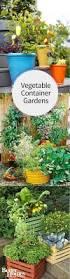 Vegetable Pot Gardening For Beginners 328 Best Food In Flowerpots Images On Pinterest Vegetables Garden