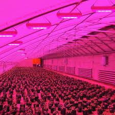 t5 vs led grow lights t5 led lights led lites usa