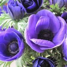 wholesale fresh flowers danisa s wholesale fresh flowers inc 30 photos 17 reviews