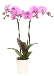 Low Light Flowering Plants by Feng Shui Plants In Bathroom That Grow The Dark Bedroom Inspired