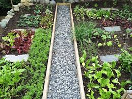 What To Plant In Your Vegetable Garden vegetable garden with gravel walkway the best time to plant in