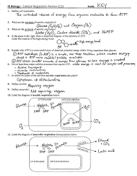 Photosynthesis And Cellular Respiration Worksheet Ib Respiration Review Key 2 8