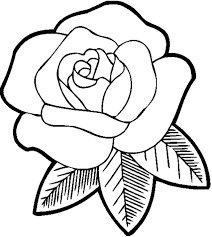 rose printable coloring page coloring page pedia