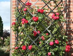 exedra trellis trellises for walls www classic garden elements