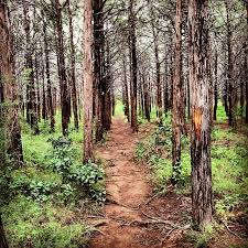 oklahoma forest images The parallel forest in oklahoma is seriously creepy and might just jpg