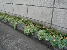 Succulent Rock Garden by Awesome Picture Of Small Garden Design And Decoration Using Grey