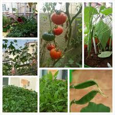 Vegetable Garden Blogs by On Starting An Organic Terrace Garden