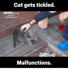 Tickled Memes - cat gets tickled metrocouk story full ekremicagala malfunctions
