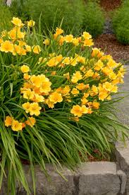 99 best shades of yellow images on pinterest landscaping ideas