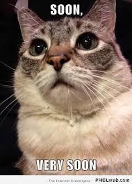 Soon Cat Meme - 27 soon cat meme pmslweb