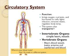 Human Anatomy And Body Systems Comparative Anatomy Animal Body Systems Circulatory System Aisd