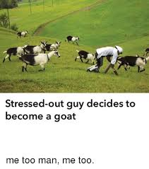 Stressed Out Memes - stressed out guy decides to become a goat me too man me too meme