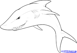 coloring glamorous easy sharks draw white