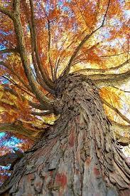 odditrees 20 interesting trees album on imgur